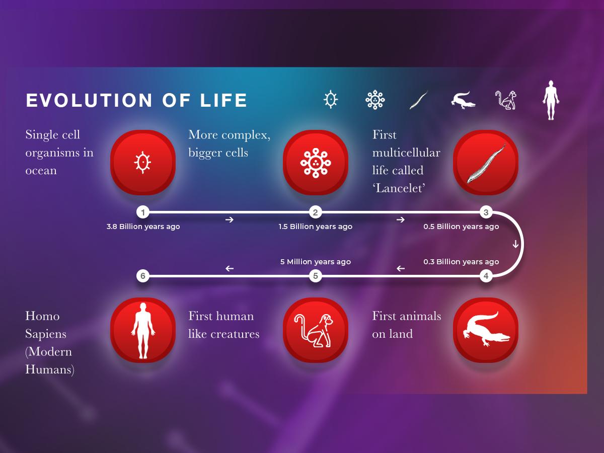 evolution of life - HD1200×900